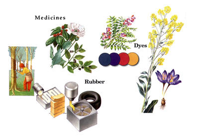 medicines obtained from plant sources