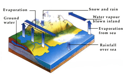 The constant circulation of water that produces rain is called the